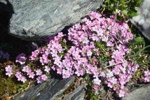 Col Fenetre Fleurs